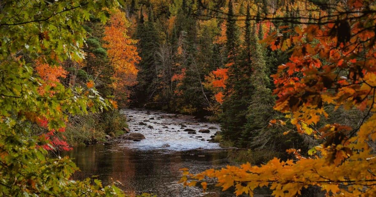 river surrounded by fall colours